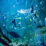 Vingt mille lieues sous les mers avec la Teamig87